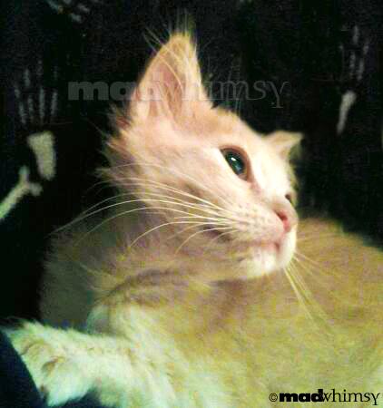 pretty, pretty kitty